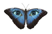 butterfly-eye2